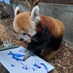 Inspiration from Your Favourite Animal (Enhance Your Creativity)